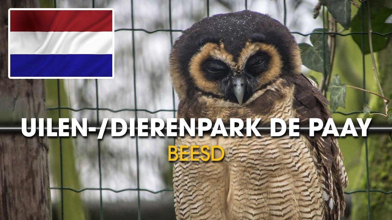 Uilen- en dierenpark de Paay